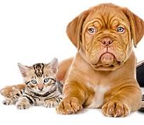 Site de rencontre entre amoureux des animaux