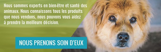 681x222xboutique-pour-chien.jpg.pagespeed.ic.43I5sGf8hT