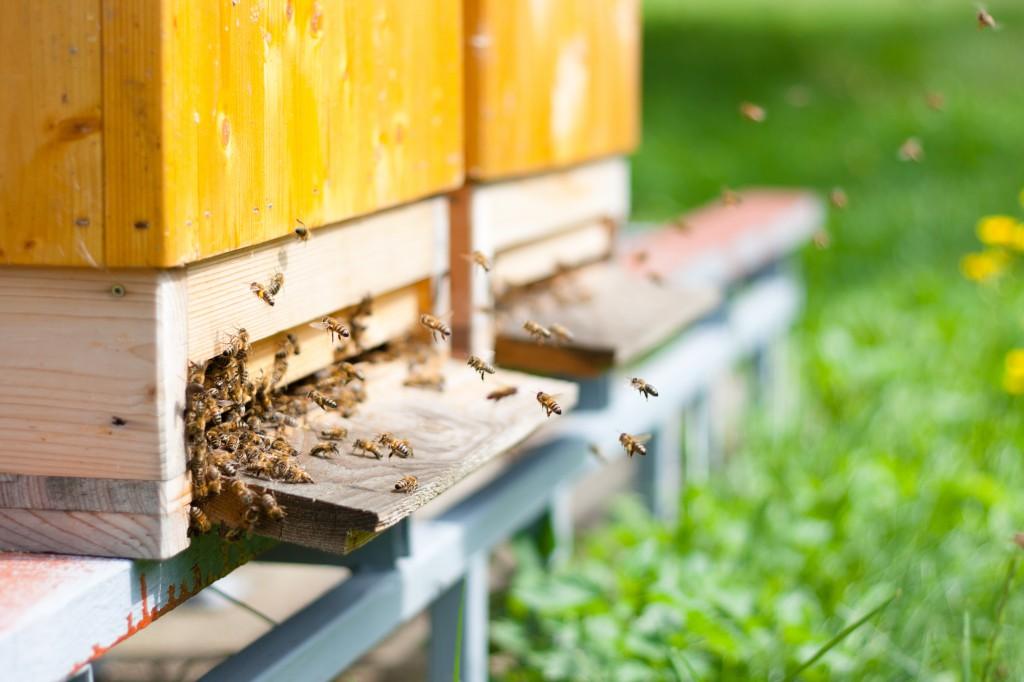 0.2 Idée Bandeau - Les ruches (2)