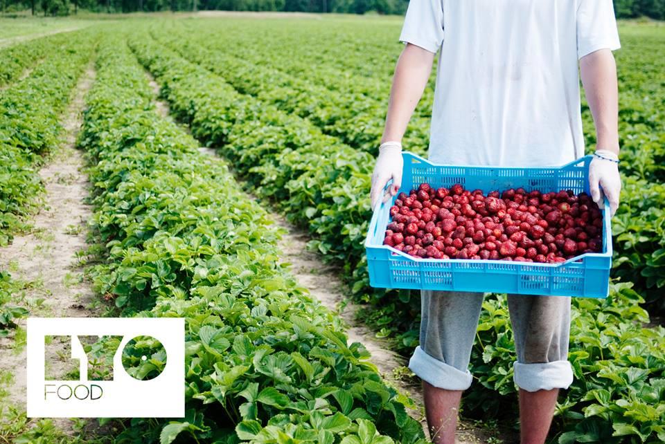 Récolte de fruits par Lyo Food