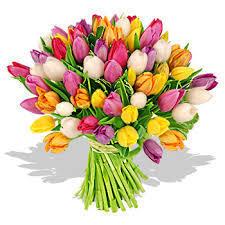 tulipe_m