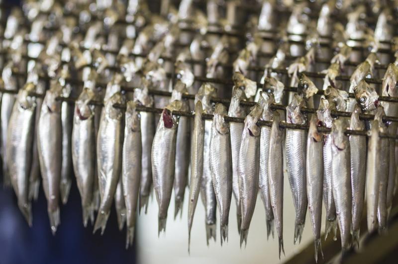 illustration-famille-sardines-sprats-bcsu