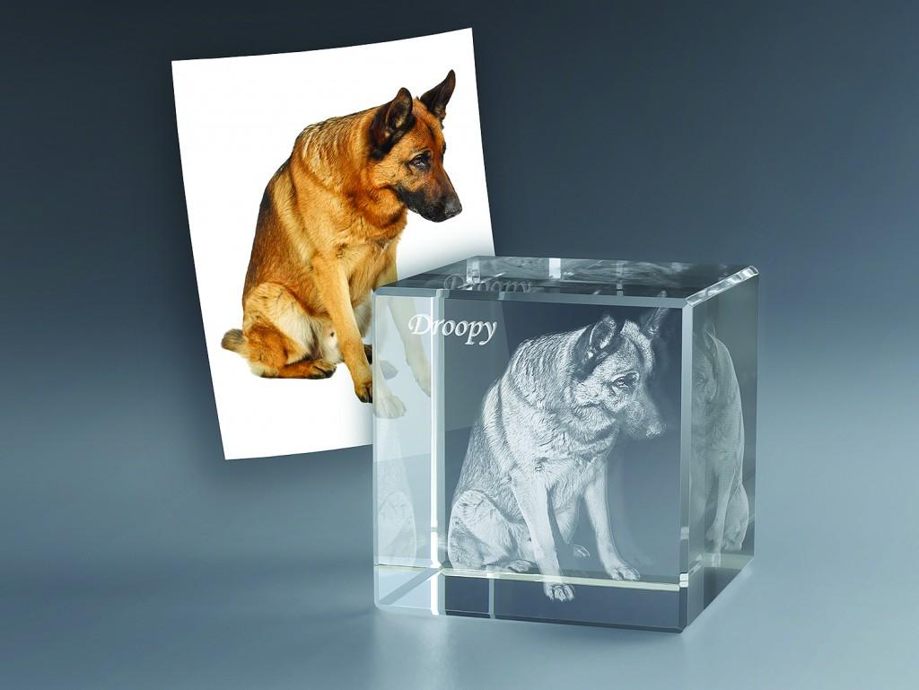 Cude-verre-3d-chien-Zephyr
