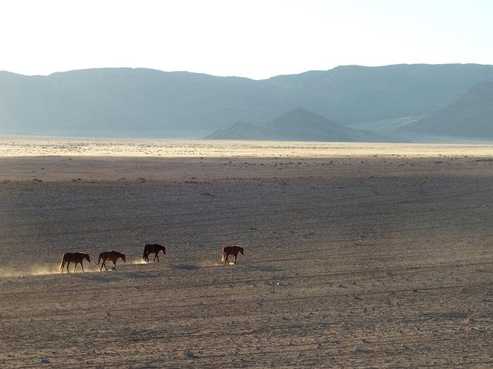 Aus en Namibie