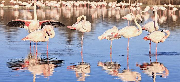 flamingo_camargue_france_leboat_glg