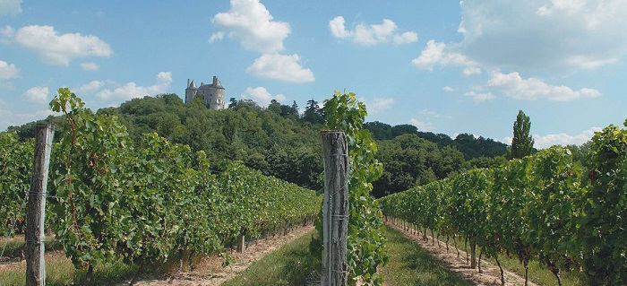 vineyards_of_buzet_aquitaine_leboat_glg