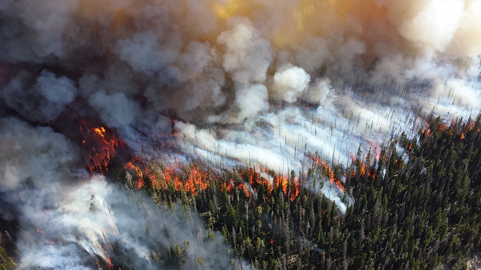 feux-de-forêts-OMPE-2