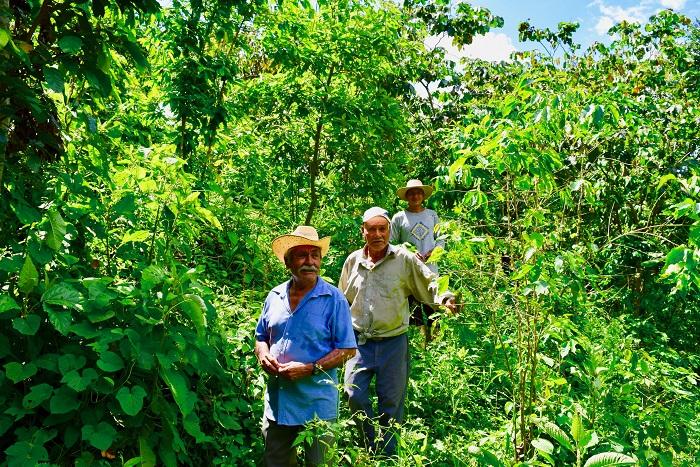 Générations de producteurs de café bio et équitable, Chiapas, Mexique