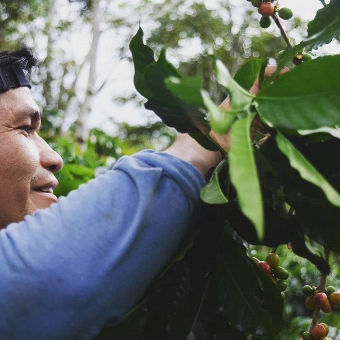 Producteur péruvien pendant la récolte