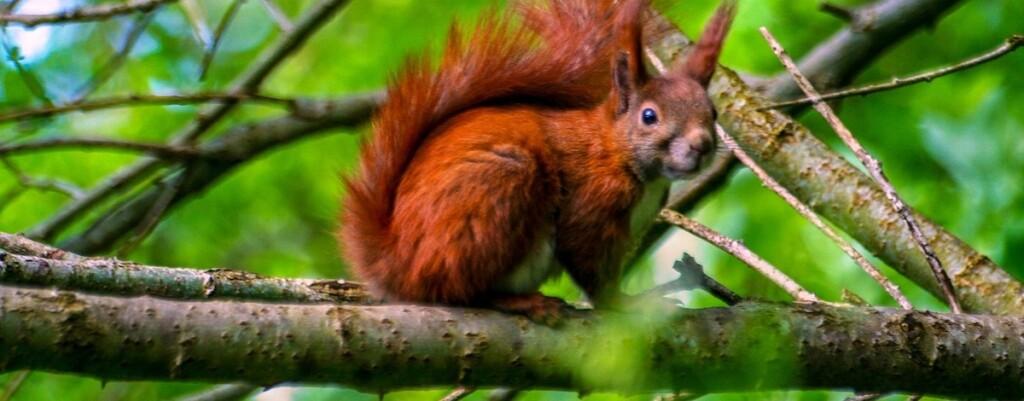 squirrel-3414361_1280