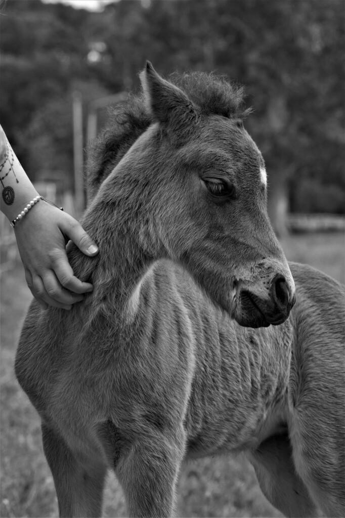 foal-5252482
